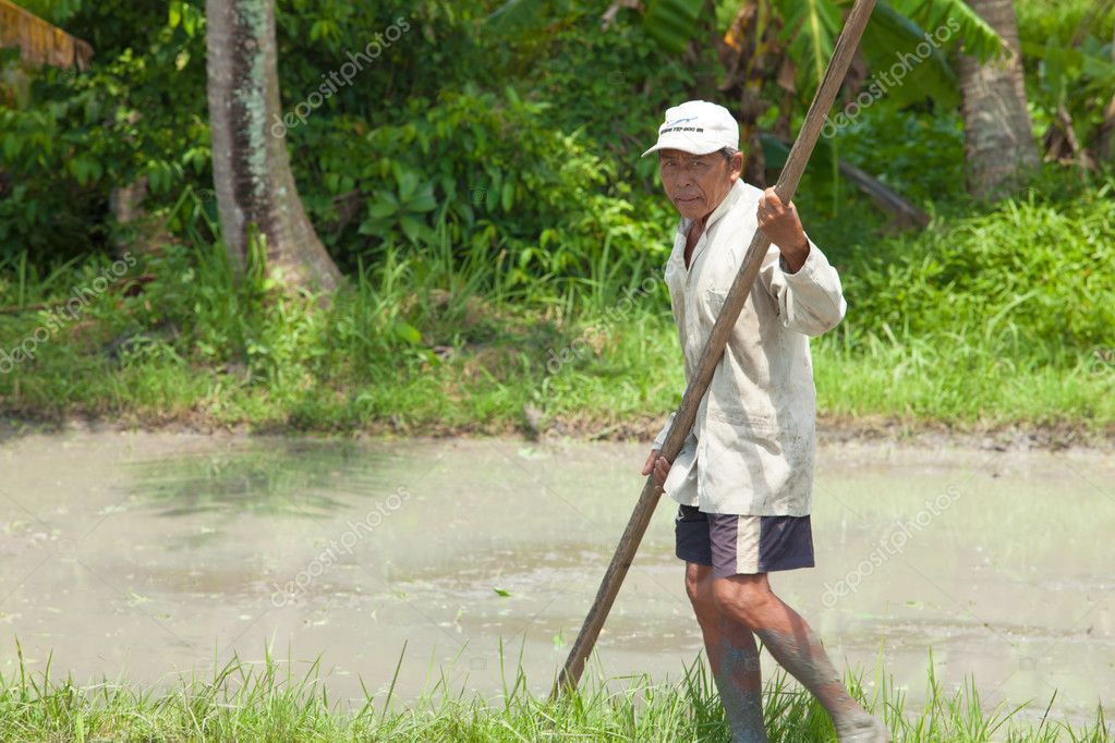 BALI - FEBRUARY 15. Farmer uses wooden tool to prepare paddy field on February 15, 2012 in Bali, Indonesia. Farmers typically plant Green Revolution rice varieties allowing 3 growing seasons yearly. — Stock Photo #10962151