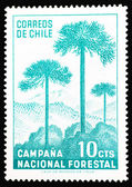 Forestal campaign of Chile — Stock Photo