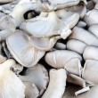 Oyster mushrooms — Stock Photo #10792388