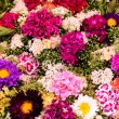 All kind of flowers - Stock Photo