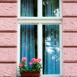 Windows and flowers — Stock Photo