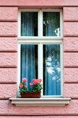 Windows i kwiaty — Zdjęcie stockowe