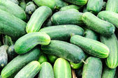 Cucumbers background — Stock Photo