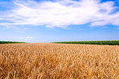 Field landscape — Stock Photo