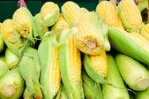Maïs sur le marché — Photo