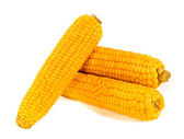 Fresh corns — Stock Photo