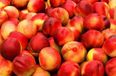 Fresh nectarines — Stock Photo