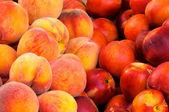 Nectarine and peaches — Stock Photo
