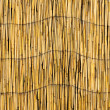 Stock Photo: Cane background