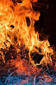 Boom branden — Stockfoto