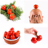Tomatoe concept — Stock Photo
