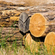 Tree cut — Stock Photo #12143958