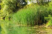 Green swamp — Stock Photo