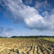 Cultivated land — Stock Photo #10954414