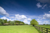 Strom na zelené louce — Stock fotografie