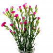 Stock Photo: Bouquet of carnations