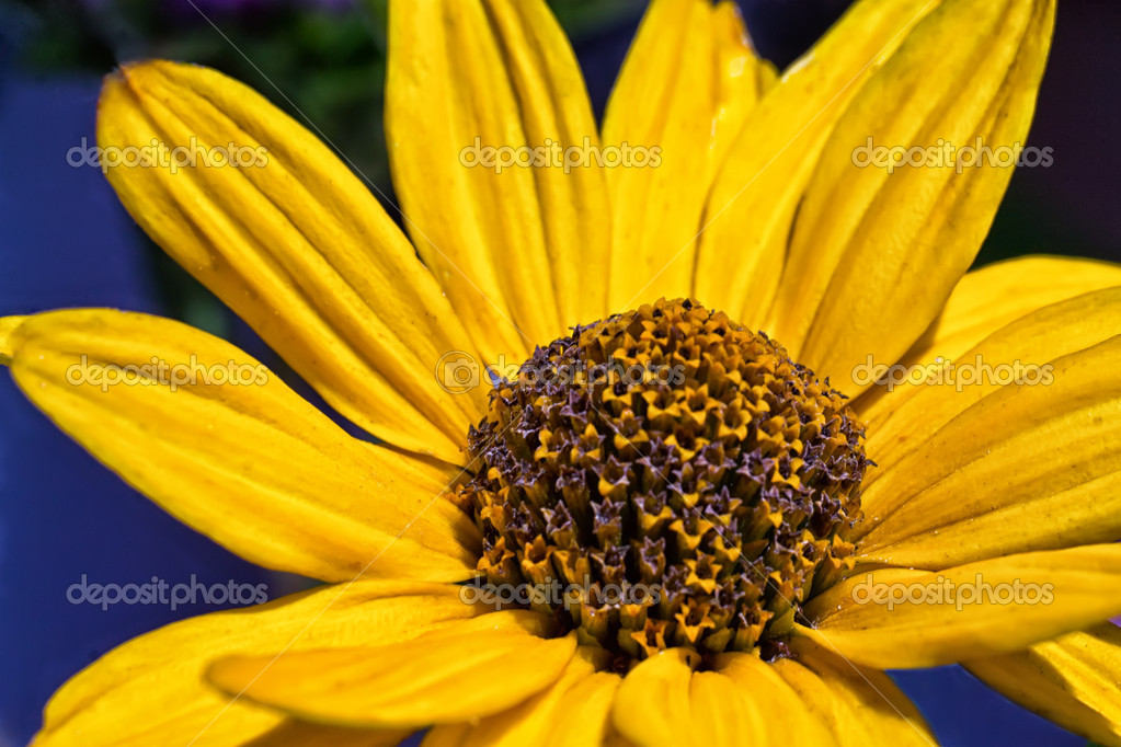 Yellow flower — Stock Photo #11923658
