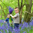 Boys plauing in the bluebell woods — Stock Photo