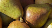 Green Pears — Stock Photo