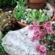 Rock garden — Stock Photo