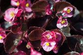 Sea of flowers — Stock Photo