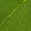 Green leaf texture — Stock Photo #10950771