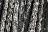 Alten stämmen von acacia — Stockfoto