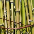 Stock Photo: Bundle of bamboo stalks