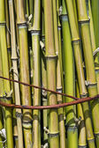 Bundle of bamboo stalks — Stock Photo