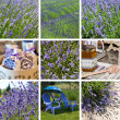 Lavender collage — Foto de Stock