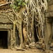 Angkor Wat — Stock Photo #10917826