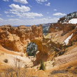Bryce Canyon — Stock Photo #11506025