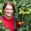 Stock Photo: Smiling Worker Picking Tomatos