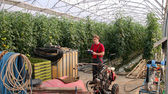 Worker in Commercial Greenhouse — Stock Photo