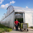 Stock Photo: Commercial Greenhouse Exterior