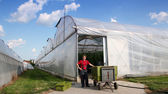Commercial Greenhouse Exterior — Stock Photo