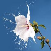 White splash flowers — Stock Photo