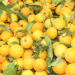 Fresh market produce of oranges — Stockfoto