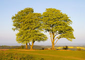Beech trees on Cothelstone Hill on the Quantock Hills in Somerset — Stock Photo