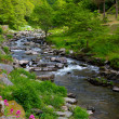 Постер, плакат: The river running from Lynmouth to Watersmeet in Devon