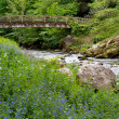 Постер, плакат: Bridge over the River Lyn near Watersmeet Lynmouth in Devon