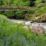 ������, ������: Bridge over the River Lyn near Watersmeet Lynmouth in Devon