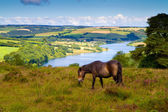 Wimbleball Lake Exmoor National Park Somerset England — Stock Photo