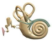 Inner ear front view — Stock Photo