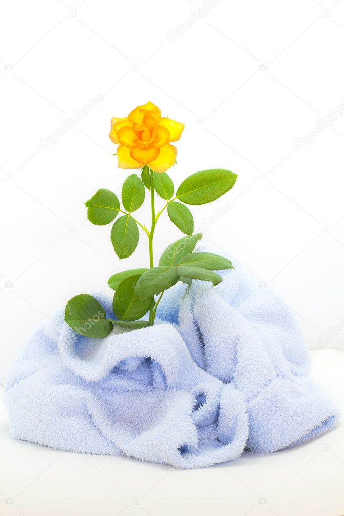 Yellow rose on cloth — Stock Photo #11040300