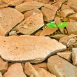 Green sprout growing from broken stone — Stock Photo