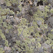 Royalty-Free Stock Photo: A background rock moss texture