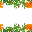 Bright Tagetes flowers frame — Stock Photo #11017403