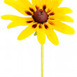 Stock Photo: Rudbeckiflower