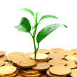 Royalty-Free Stock Photo: Plant and gold coins.